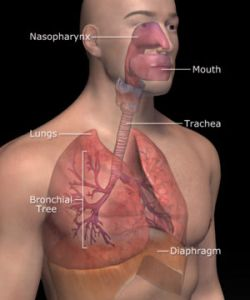 Kontrol Sistem Respirasi