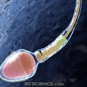 Spermatogenesis dan oogenesis perbedaan spermatogenesis dan oogenesis perbedaan spermatogenesis dan oogenesis spermatogenesis spermatogenesis artinya proses pembentukan sperma proses ini terjadi di dalam alat genital pria ccuart Choice Image