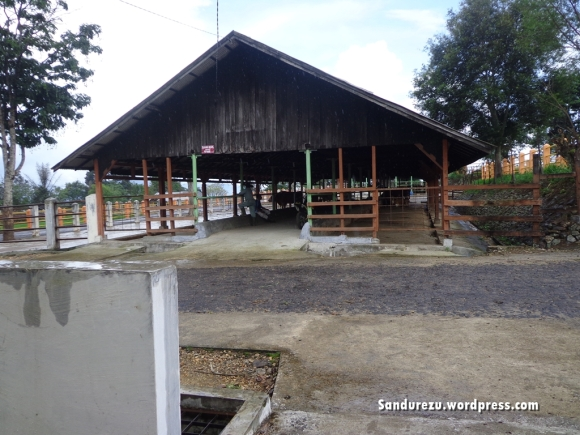 Penampakan salah satu kandang sapi
